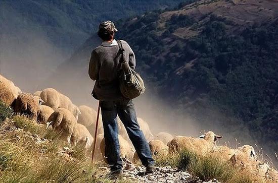 ¿Son infalibles los pastores?